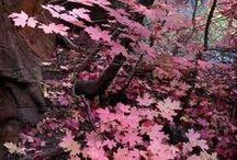 《~Autumn in Pink~》