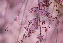 《~Shades of Pink/Mauve~》