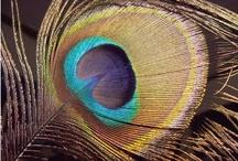 Peacock Weddings / www.katherinecourtney.com
