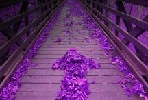 Purple Weddings / www.katherinecourtney.com