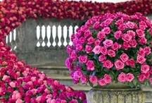 Rose Weddings / www.katherinecourtney.com
