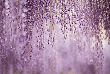 Lavender Weddings / www.katherinecourtney.com