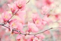 Cherry Blossom Weddings  / www.katherinecourtney.com