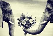 Safari Weddings / www.katherinecourtney.com
