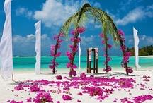 Tropical Weddings / www.katherinecourtney.com