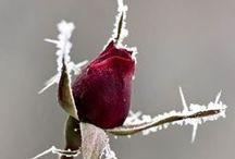 Talvipuutarha (Winter Garden)