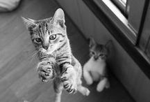 Kissat (Cats)