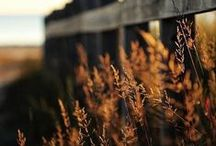 Fall Into Autumn / by Josie By Natori