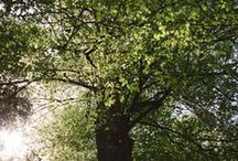 Wald / Der Wald ist nicht nur Sehnsuchtsort und Lebensraum. Neben den vielfältigen Schutz- und Erholungsfunktionen erfüllt der Wald seit Jahrhunderten und ganz selbstverständlich auch wirtschaftliche Zwecke, indem er den nachwachsenden Rohstoff Holz bereitstellt. Die integrative und naturnahe Forstwirtschaft, wie sie in Bayern seit vielen Jahrzehnten betrieben wird, vereint diese unterschiedlichen Funktionen. Zum Wohle des Menschen und der Natur.