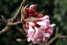 Winter garden / Plants & ideas for bringing gardens alive in winter