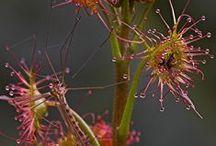 Cacti, succulents, airplants & carnivorous plants