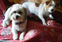 Lucy, Rhani and Otis / all about us