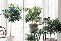 Conservatory pots & plants / Conservatory pots & plants