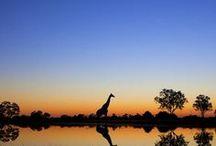 Moremi (Khwai), Makgadikgadi (Khumaga) & Kgalagadi Game Reserves / Best wildlife parks on the planet... Botswana