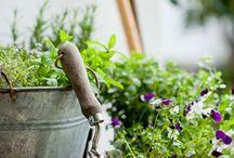 Have & plante leksikon / STUDY TIME