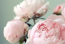 Flower Power /