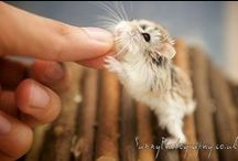 All Creatures Great And Small / Amazing Animals / by April Blossom