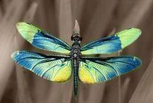 Dragonflies / by Lauren Zarate
