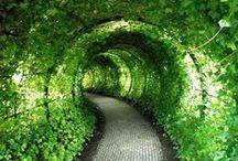 přírodní zajímavosti i nápady pro pěstování / zajímavosti pro zahradu