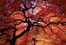 Tree Treasures / Beautiful Trees of the World / by Lauren Zarate