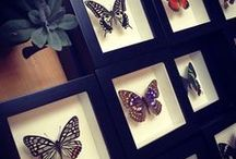 BRUDANTE FRAMED / Framed Butterflies By Brudante