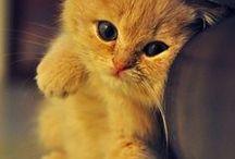 Cats & Dogs / Beautiful cute pets (family*)