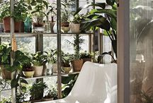 small space gardening/Glasshouse inspiration