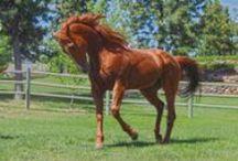 Horse 馬 / Beautyful, things, art, animals, nature, horsey