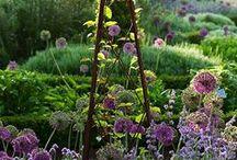 garden/outdoor / by Aya Yamada