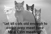 Warrior Cats / An amazing book series