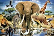 Wilde dieren in Afrika / Wild animals in Africa / by Arie Schalekamp