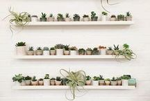 Botanical / Beautiful indoor plants and how to style them