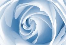 blue~~blue / by Barbara Faylor