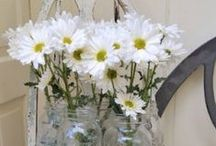 daisy mae♥dandelion wish