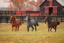 Horses & LongHorns