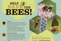 HELP SAVE THE BEES! / Resources for action. Let's work together to protect the bees, birds, bats, beetles, butterflies, moths and other important pollinators that keep us in chocolate, coffee and 75% of all the other food we like to eat!