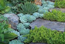 Garden Inspiration / Idea board for design, colour, plants, structure