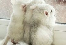 Animal Love | Dieren / Cute animals and even cuter animal themed-products to decorate your home with. Schattige dieren!