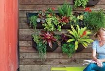 Gardens & Flowers / Kertek & Viragok