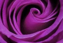 purple,purple and purple