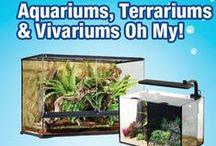 Aquariums, Terrariums & Vivariums Oh My!