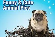 Funny & Cute Animal Pics
