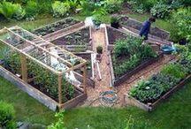 Grow your Own / Vegetable Garden Ideas