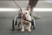 Happily Healed Animals / Pets with disabilities who don't let that stop them from having fun and spreading love around.