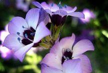 Native Plant Gardening / Gardening with California's abundance of plant species!