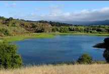 CNPS 2015 Conservation Conference / CNPS is celebrating 50 years of promise and progress January 15-17, 2015 in San Jose! Join 1,000 scientists, students, land managers, gardeners, and more at California's largest conservation conference. http://cnps.org/cnps/conservation/conference/2015/
