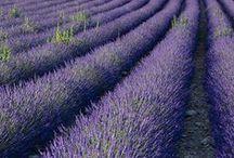 Provence, Toscana