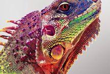 Wild Animals / Amazing animals