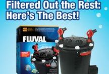 Filtered out the rest: Here's The Best! / Are you looking for a new aquarium filter? We've got tons of options to fit your fish tank on our store @ www.bigalspets.com!  You can also follow us on Twitter @BigAls_Pets and Facebook: Big Al's Online to get the latest updates on promotions and sales! Check out our youtube channel @ https://www.youtube.com/channel/UCcHlOBf2W9wAUD8AwUMsF8Q