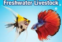 Freshwater Livestock / Check out a great list of different Livestock for your Freshwater Aquarium! Get some ideas, and start your aquarium today!